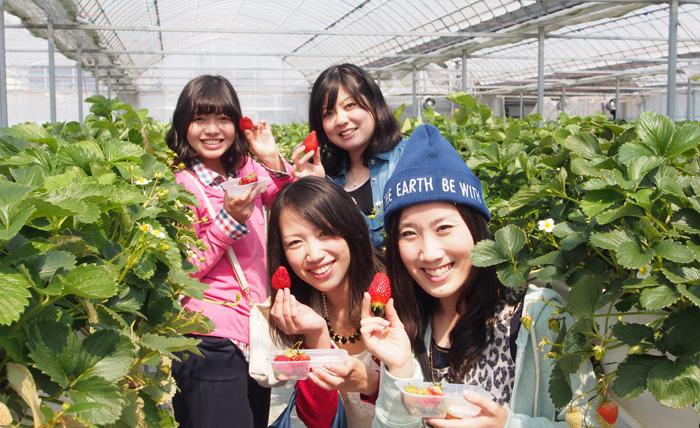 広くて食べやすいイチゴ農園
